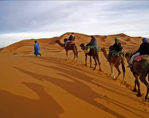 Camel Riding in Jeddah
