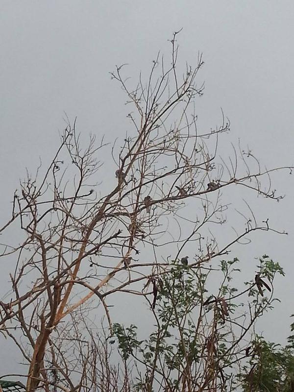 rain_in_jeddah_5